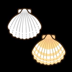 肌色と白色の帆立貝殻