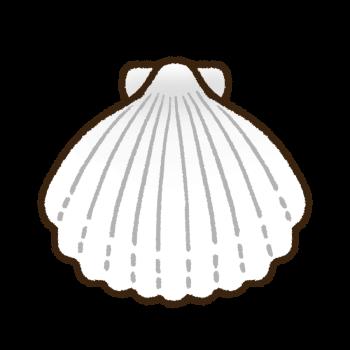 白色の帆立貝殻