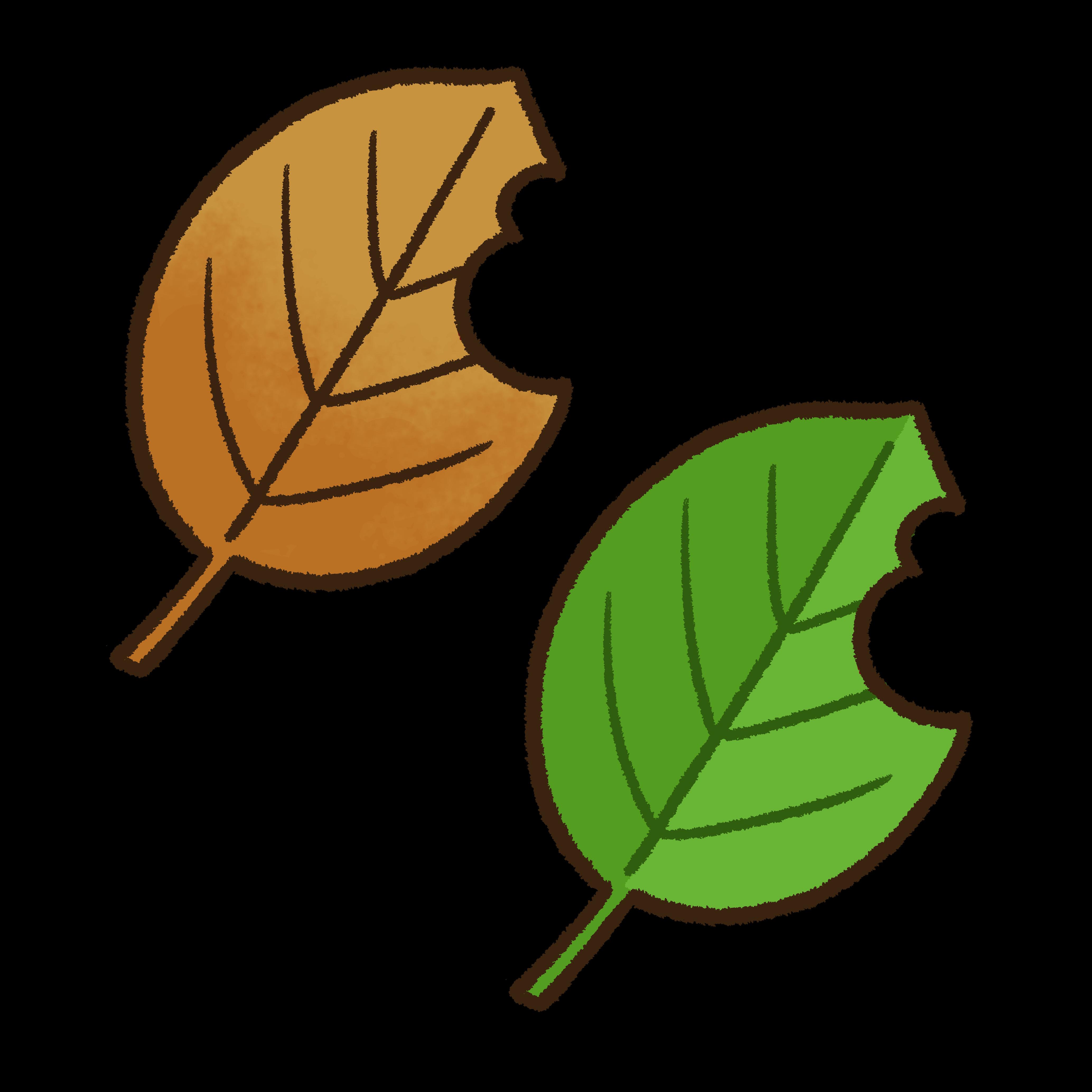 虫食いのある葉っぱ