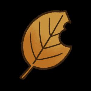 虫食いのある茶色の葉っぱ