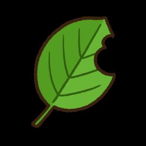 虫食いのある緑色の葉っぱ