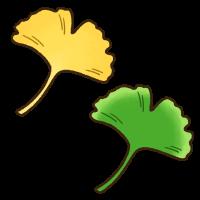 黄色と緑色のイチョウの葉