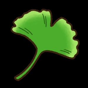 緑色のイチョウの葉