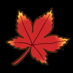 赤色の紅葉の葉